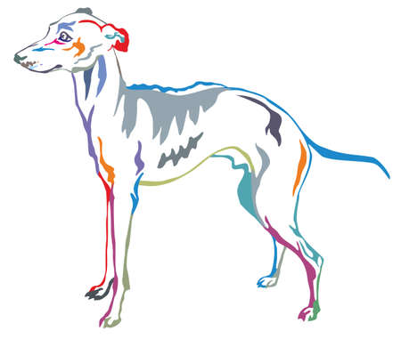 Colorful decorative portrait of standing in profile Italian Greyhound, vector isolated illustration on white background