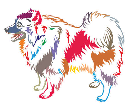 Colorful decorative portrait of standing in profile Keeshound, vector isolated illustration on white background
