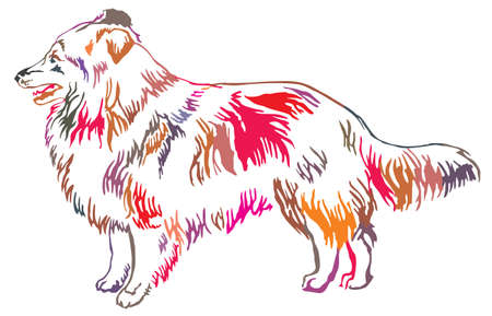 Colorful decorative portrait of standing in profile Sheltie(Shetland Sheepdog), vector isolated illustration on white background