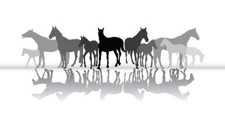 Grupo de siluetas aisladas negras y grises de los caballos (yeguas y potros) con su reflexión en el fondo blanco. Ilustración vectorial
