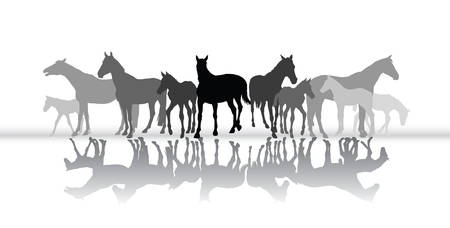 Group of isolated black and grey standing silhouettes of horses (mares and foals)  with their reflection on white background. Vector illustration.
