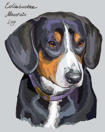 灰色の背景に別の色の Entlebucher ・ マウンテン ・ ドッグ ベクトル手描画図  イラスト・ベクター素材