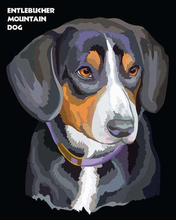 Gekleurd portret van Entlebucher-Berghond geïsoleerde vectorillustratie op zwarte achtergrond