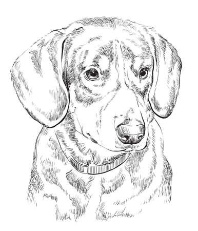 De vectorhand die van de Entlebucherberghond zwart-wit illustratie trekt die op witte achtergrond wordt geïsoleerd