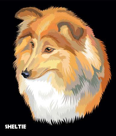 Colored portrait of Sheltie (Shetland sheepdog) isolated vector illustration on black background