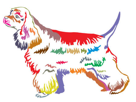 Colorful decorative portrait of standing in profile dog American Cocker Spaniel, vector isolated illustration on white background