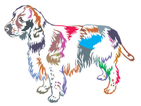 Colorful decorative portrait of standing in profile dog English Springer Spaniel, vector isolated illustration on white background Vettoriali