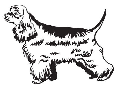 Decorative portrait of standing in profile American Cocker Spaniel, vector isolated illustration in black color on white background