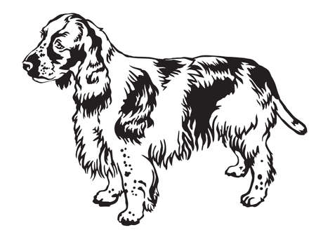 Decorative portrait of standing in profile English Springer Spaniel, vector isolated illustration in black color on white background