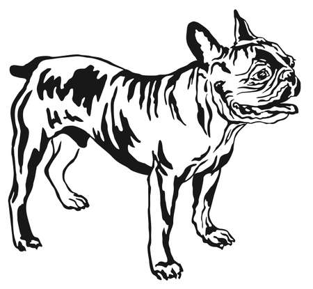 Decorative portrait of standing in profile French Bulldog, vector isolated illustration in black color on white background