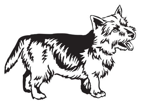 Decorative portrait of standing in profile Norwich Terrier, vector isolated illustration in black color on white background Illustration