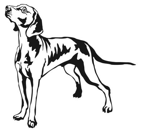 Decorative portrait of standing in profile Weimaraner, vector isolated illustration in black color on white background