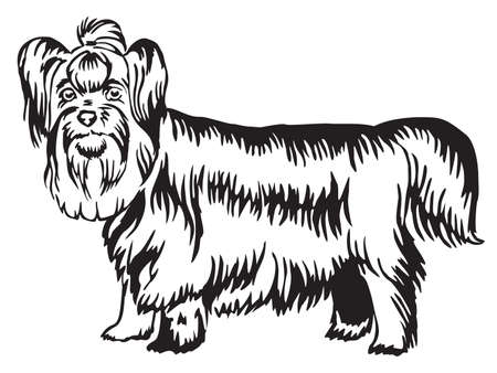 Decorative portrait of standing in profile Yorkshire Terrier, vector isolated illustration in black color on white background
