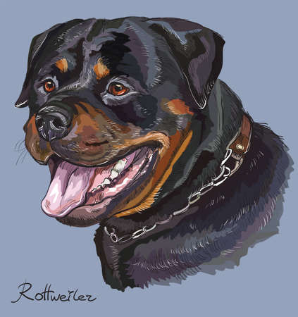 Rottweiler vector hand drawing illustration in different color on blue background