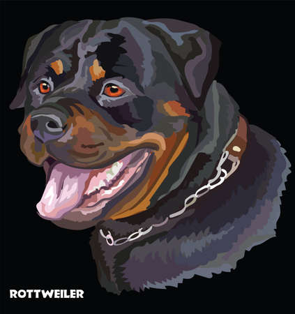 Colored portrait of Rottweiler isolated vector illustration on black background Çizim