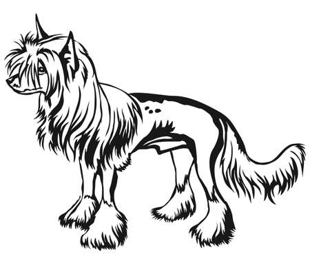 Decorative portrait of standing in profile Chinese Crested Dog, vector isolated illustration in black color on white background