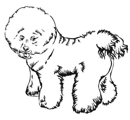 Decorative portrait of standing in profile Bichon Frise, vector isolated illustration in black color on white background