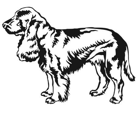 Decorative portrait of standing in profile Field Spaniel, vector isolated illustration in black color on white background