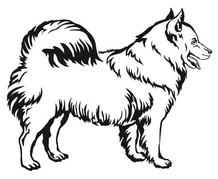 Decorative portrait of standing in profile Samoyed, vector isolated illustration in black color on white background