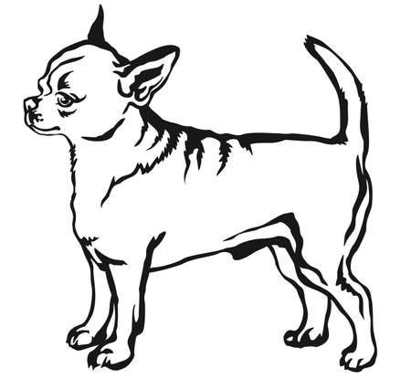 Decorative portrait of standing in profile shorthaired Chihuahua, vector isolated illustration in black color on white background