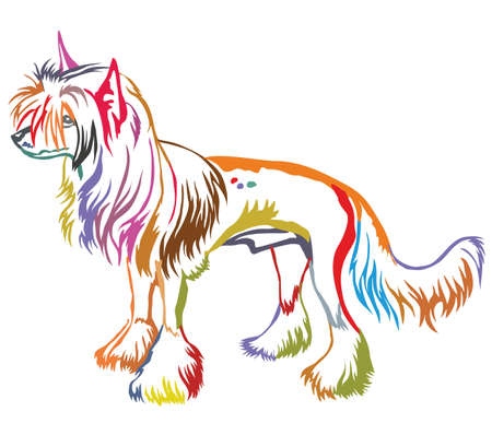 Colorful decorative portrait of standing in profile Chinese crested dog. Illustration