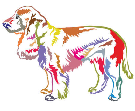 Colorful decorative portrait of standing in profile Field Spaniel.