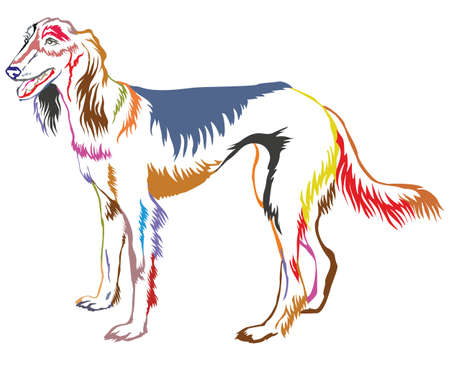 Colorful decorative portrait of standing in profile Persian Greyhound (Saluki). Çizim