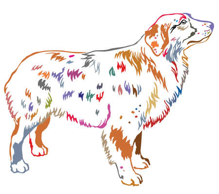 Colorful contour decorative portrait of standing in profile dog Australian shepherd.
