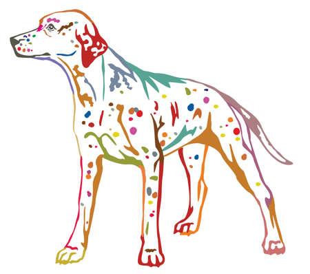 Colorful contour decorative portrait of standing in profile dog Dalmatian. Illustration