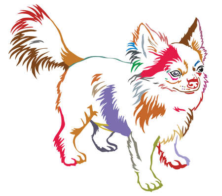 Colorful contour decorative portrait of standing in profile dog long-haired Chihuahua. Illustration
