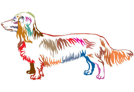 Colorful contour decorative portrait of standing in profile dog long-haired Dachshund. Иллюстрация