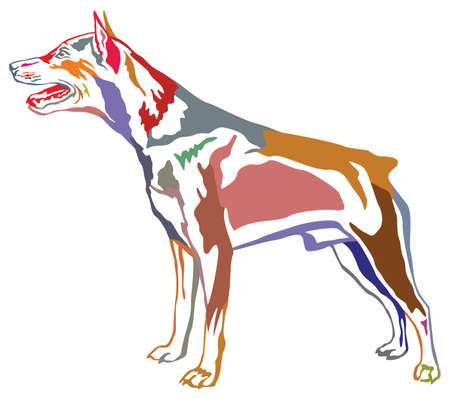 Colorful contour decorative portrait of standing in profile dog Pinscher.
