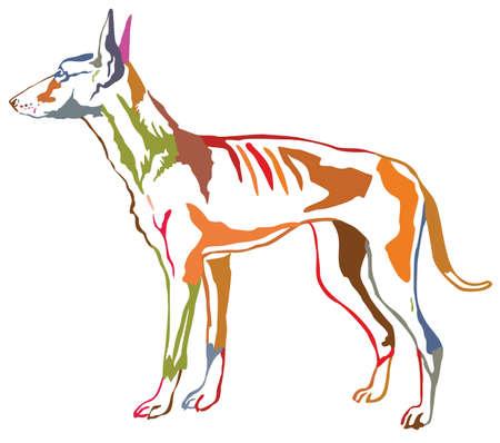 Colorful contour decorative portrait of standing in profile dog Podenco Ibicenco (Ibizan Hound).
