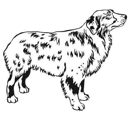 Decoratieve contour portret van staande in profiel Australische herder. Stock Illustratie