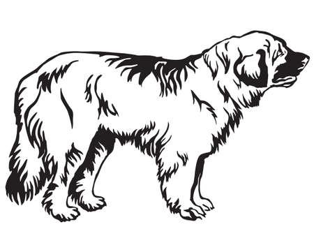 Decorative contour portrait of standing in profile Leonberger dog. Illustration