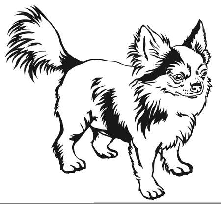 Decorative contour portrait of standing in profile long-haired Chihuahua dog.