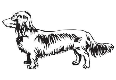 Decoratieve contour portret van staande in profiel Langharige Tekkel hond. Stock Illustratie