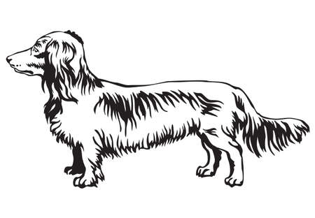 Decorative contour portrait of standing in profile Long-haired Dachshund dog.