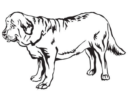 Decorative contour portrait of standing in profile Spanish Mastiff dog.
