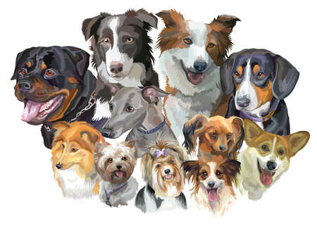 Set of colorful portraits of dog breeds isolated on white backdrop. Ilustração