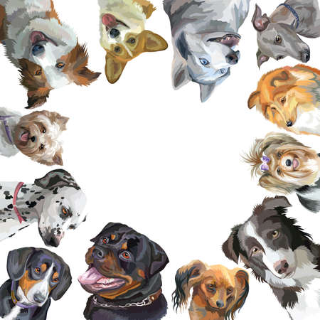 Group of dogs portraits different breeds (Rottweiler, border collie; toy Terrier, Pembroke Welsh Corgi, Sheltie,Yorkshire Terrier, Italian Greyhound, Biewer terrier,Entlebucher Mountain Dog, dalmatian, siberian husky) in square isolated on white backgroun