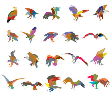 Set of vector colorful  cut out flying and sitting silhouettes of american eagle (white-tailed eagle, bald eagle) on white background