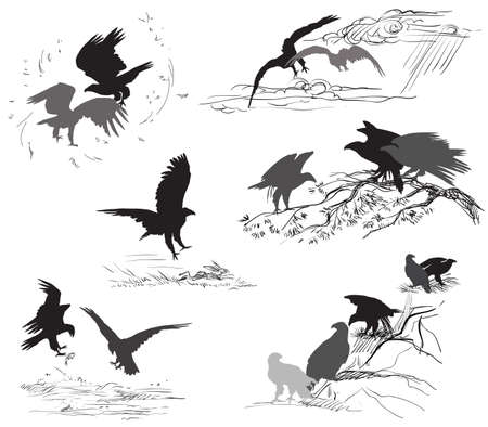 Set of vector cut out scenes of eagle silhouettes in black color on white background. Relationship of eagles Ilustração
