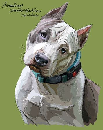 American Staffordshire Terrier vector hand drawing illustration in different color on green background