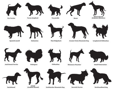 Vector set of different breeds dogs silhouettes isolated in black color on white background. Part 4