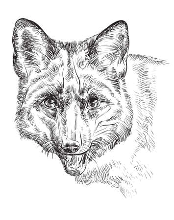 Vector hand drawing  portrait of fox in black color isolated on white background
