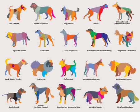 Vector set of colorful mosaic isolated different breeds dogs silhouettes on grey background. Part 4