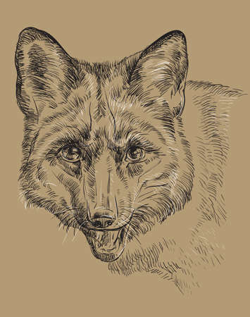 Hand drawing portrait of fox.