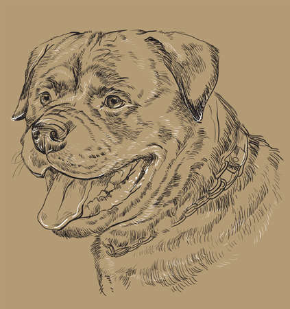 Rottweiler vector hand drawing black and white illustration isolated on beige background