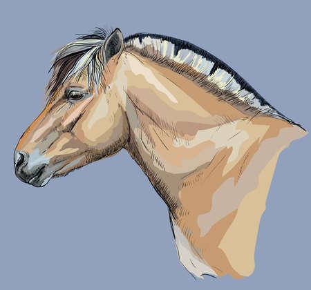 Portrait of horse head.